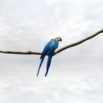 Alice Zilberberg: Pondering Parrots