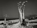 Beth Moon: Desert Rose (Erher Beach)