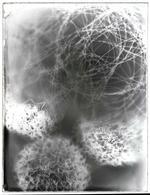 Bill Westheimer: Collodion Wire Balls 11, 2002
