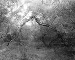 Blaine Ellis: Broken Cottonwood, Abiquiu, 2001