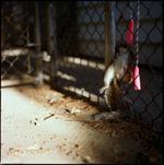 Colleen Plumb: Squirrel, 2005