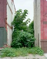 Daniel Traub: Lot, North Nineteenth Street near West Cumberland Street, North Philadelphi