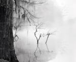 David H. Gibson: Tree Trunk and Reflections, Big Cypress Bayou, Texas, 1991