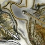 Edward Bateman: Leaf No. 7c1