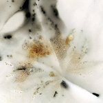 Edward Bateman: Leaf No. 22