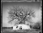 Elaine Ling: Baobab, Tree of Generations #17, 2009
