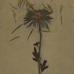 James Hajicek & Carol Panaro-Smith: Botanical/07-11, 2007