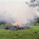 Jane Alden Stevens: Burning Apple Bags, Fall, Aomori Prefecture