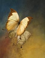 Jo Whaley: Nymphalidae: <i>Charaxes</i>