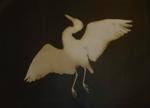 Kate Breakey: Great Blue Heron