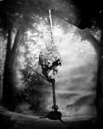 Keith Carter: Hornet's Nest, 2012