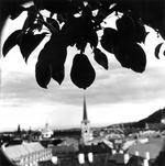 Keith Carter: Pear Tree, 2001