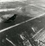 Ken Rosenthal: Raven