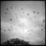 Krista Elrick: Untitled, 2004