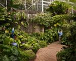 Kyle Ford: The Jungle Room, Tropical Green House, Miami, 2009
