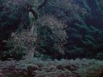 Michael Lange: WALD   Landscapes of Memory #1825