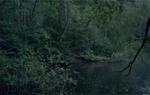 Michael Lange: WALD | Landscapes of Memory #0283