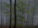 Michael Lange: WALD | Landscapes of Memory #2504