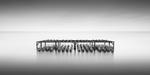 Michael Levin: Oyster Rack, 2011