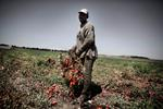 Michele Palazzi & Alessandro Penso: Seasonal Worker During the Tomato Harvest, Basilicata, Italy