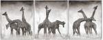Nick Brandt: Giraffe Triptych, Maasai Mara, 2005