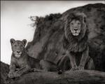 Nick Brandt: Lion Couple on Rock, Serengeti 2010
