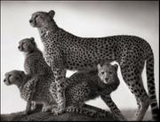 Nick Brandt: On This Earth 2000-2004 Vol. 1