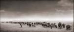 Nick Brandt: Elephant Exodus, Amboseli, 2004