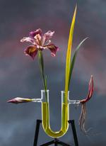 Photo Objects & Small Prints: Jo Whaley, Iris ser, Californicae, 2012