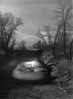 Raymond Meeks: Fallen Tree  , 1996