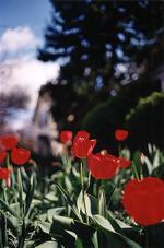 Terri Weifenbach: 17 April 1999 (1)