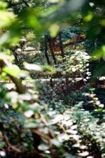 Terri Weifenbach: Woods II 15, 2010