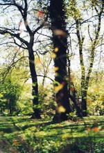 Terri Weifenbach: Woods 01, 2010